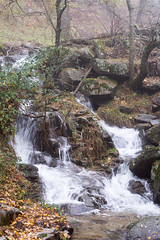 brook (marcin1868) Tags: stream brook forest autumn relaxation water nature nikond7200 nikon d7200 50mmf18d 50mm fall fog leaf rock grass green yellow