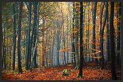 fast an der Mritz (NPPhotographie) Tags: nature art creative oberberg mritz serrahn npp tree wood forest autumn fall fog mist dust magic