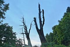 IMG_3623-3625_HDR (Ethene Lin) Tags: 新中橫 塔塔加 夫妻樹 夜景