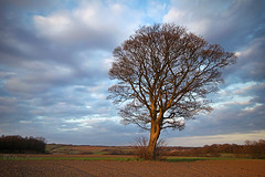 A tree....... (Chrisconphoto) Tags: tree bare sthelens crank goodlight billinge