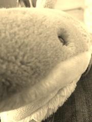 The eye of the shark ♥ (Charlotte Tebbutt) Tags: ocean sea stuffedtoy white cute eye love look mouth toy grey shark stuffed view teddy jaw teeth fluffy samsung jeans galaxy eyeview seacreature suma teethy samsunggalaxy flickrandroidapp:filter=ocelot teethyshark