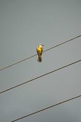 po! (Mostly Tim) Tags: bird vogel pjaro piep po worldphotos mostlytim