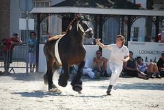 trekpaardkeuring ijzendijke 21072013 3719 (jo_koneko_san) Tags: horses horse holland netherlands cheval nederland zeeland chevaux paard hollande zeeuwsvlaanderen 2013 ijzendijke parden trekpaard zeeuwstrekpaard trekparden