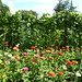 Lost Gardens of Heligan_1