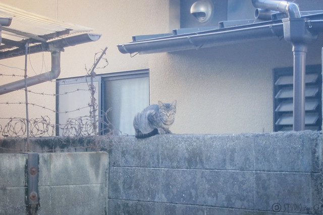 Today's Cat@2013-09-18