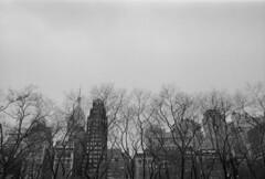 Pt. V - Heights (The Glorious End) Tags: street nyc newyorkcity trees winter cold film analog 35mm project pentax kodak trix wideangle smc yashica filmisnotdead takumar28mmf35 believeinfilm