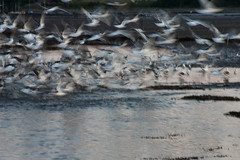 060713-300 (www.cjo.info) Tags: ocean sea seascape blur bird water animal fauna island coast scotland movement edinburgh unitedkingdom gull estuary motionblur coastal seabird causeway firth firthofforth slowshutterspeed cramond cramondisland tidalisland camera:make=canon exif:make=canon exif:focal_length=105mm exif:iso_speed=200 geo:city=edinburgh geo:state=scotland camera:model=canoneos300ddigital geo:countrys=unitedkingdom exif:lens=2801050mm exif:model=canoneos300ddigital exif:aperture=ƒ80