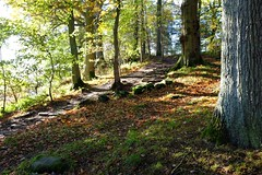 Woodland Steps (wivvy is getting there.) Tags: autumn trees leaves woodland derwentwater keswick x100s