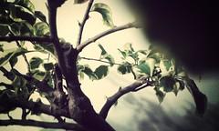Strong. (juan99latorre) Tags: brown green nature bogota bonsai strong casual wondersofnature flickrandroidapp:filter=mammoth