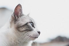 _DSC0358 (Carlos Fachini ™) Tags: animals cat gato fotografias nikond7000 fotografosãopaulo carlosfachini