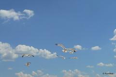 Крым, небо, облака, чайки