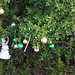 Trees_of_Loop_360_2013_013