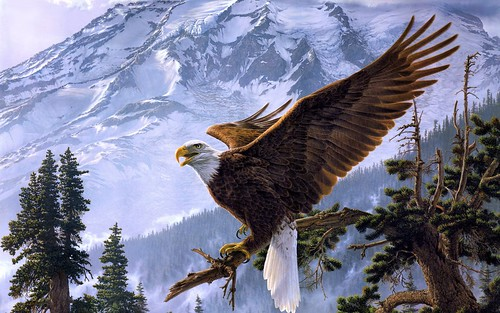 eaglesnow4