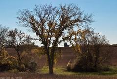 C Grove Farmland (Ceil Mills) Tags: farmland cottagegrove tamarackccflickr