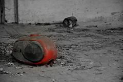 (kaktus83) Tags: abandoned teupitz reservelazarett landesirrenanstallt