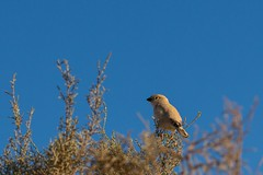 Sahara bird (Ryoushi no syokubutsuen) Tags: art sahara nature landscape desert arabic berber marocco marrakech magrib almagrib medrassa