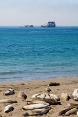 elephant seal rookery (dracisk) Tags: california beach animals bigsur pch elephantseals piedrasblancas pacificcoasthighway dracisk elephantsealrookery