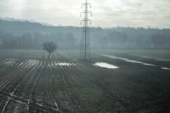 Lonely Tree (Moretti Matteo) Tags: sky italy tree water rain speed train lago italia dramatic cielo campo acqua plain pioggia treno palude solitario grano