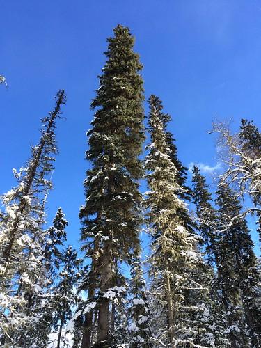 Sonne, Wald und metertiefer Schnee