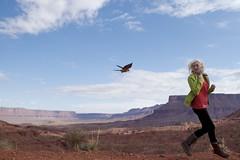 (Kai Bey) Tags: flying parrot moab freeflight