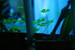 suerte. suerte que no la hay. (Presenteinfinito) Tags: verde green canon plantas frio trebol treboles canonistas