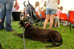 Prestwich Book Festival at Clough Day (Miss Emma Gibbs) Tags: prestwichbookfestival children betty childrensfestival prestwichcloughday books reading literature poetry dogs hounds greyhounds racingdogs breed black irish