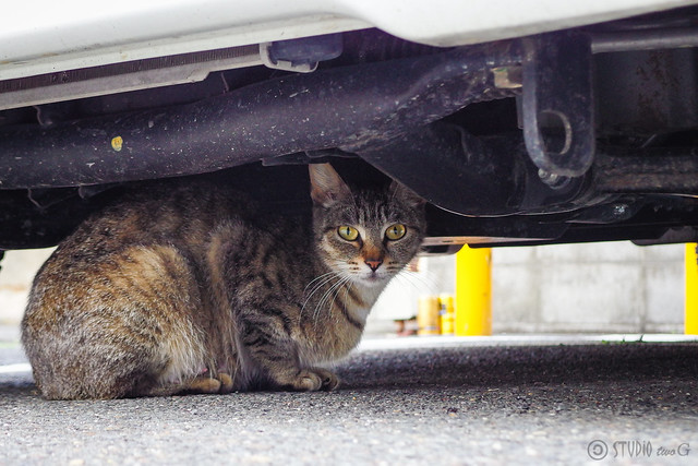 Today's Cat@2014-05-24
