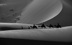 Camel ride in Erg Chebbi, Sahara - Morocco (Sigmundur Andresson (1.8 million+ views-Thank you!) Tags: africa travel sahara nature animals landscapes desert dunes morocco arab camels sanddunes merzouga rissani camelride cameltrek ergchebbi desertdunes errachidia basamortua saharasanddunes img5848 canoneos5dmarkii merzougadunes saariysqualitypictures skancheli canonef70200mm128lisiiusm cameltrekintothesahara cameltrekintosahara kasbahyasminahotel