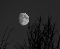 Reaching To The Moon (Catskills Photography) Tags: odc lessismore moon waxinggibbous sky night astronomy canon70300mmllens blackandwhite