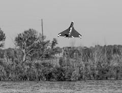 383A0985.jpg (ilzho) Tags: remotecontrol floatfly airplanes