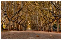 Parque Jose Antonio Labordeta (jaroro70) Tags: jaroro70 parque labordeta zaragoza otoo arboles platanooriental paseo paisaje landscape farolas faroles jos antonio hojas secas
