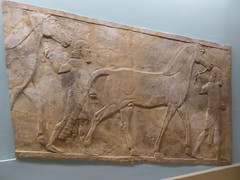 Horses (Aidan McRae Thomson) Tags: nimrud assyrian relief sculpture ancient mesopotamia britishmuseum london