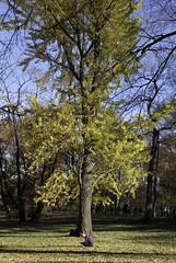 Sitting Pretty (Joe Josephs: 2,861,655 views - thank you) Tags: autumn centralpark fall fallcolor fallfoliage nyc newyorkcity travel travelphotography urbanparks landscape landscapephotography trees cityparks