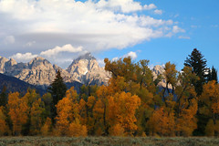 aspens1 (laelia74) Tags: wyoming grandtetons fall nature outside hiking mountains