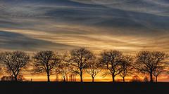 Gold hunter - Goldsucher (RainerSchuetz) Tags: sunset sundown trees contrail jettrails walker bluehour