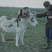 Gwynneth Lougher and pied donkey at Lamby 8.11.1978