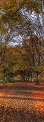 Autumn avenue.. (bluebell girl) Tags: leaves orange clifton bristol nature avenue trees canong12 autumn