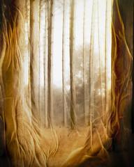 sheer forest (Hal Halli) Tags: forest sheer window trees wallart mystery netartii ontario canada artdigital shockofthenew
