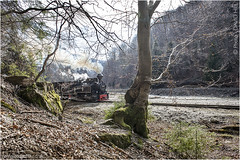 Through The Beeches (channel packet) Tags: romania elvetia steam train logging railway railroad narrow gauge scenery davidhill