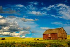 6-16-16 Palouse-8104373_4_5 (Roberta Kayne) Tags: country farm farmlife hills palouse usa washington