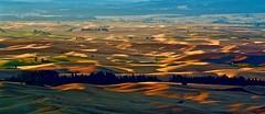 DSC_1622Early morning sun beam like golden ocean (christinachui79) Tags: outdoors nature palouse wheatland golden colours morning sunrise dawn landscape shadows daybreak daylight lights farmland