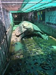 Wat Chedi Hoi -Turtles (jlarsen2006) Tags: asia thailand phatum tani temple chedi hoi wat colony turtles buddha buddhism