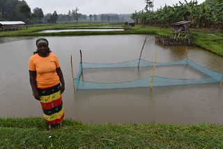 A Lady involved in fishfarming in Nyanza