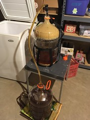 racking Cupid & Psyche (found_drama) Tags: cupidpsyche americanstrongale homebrew homebrewing siphoning tildegravitywerks essexjunction vermont vt 05452
