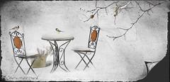 Réservée ... ( P-A) Tags: photosouslaneige lacmeech traitement texture imagination neige mésangesàtêtenoire hiver parcdelagatineau photos simpa© parcheminavecphotoshop