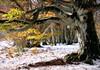 (claudiophoto) Tags: fall autumn italy parconaturale foglie coloriautunnali faggisecolari canfaito sanvicino lemarche fotodellemarche paesaggidellemarche paesaggimarchigiani