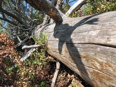 Lake Tahoe NEVADA 074 (listerdouglas) Tags: sandharbor nevadastatepark laketahoe