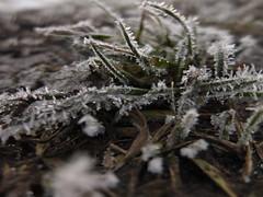 DSCF7962 (EgoR ErroR) Tags: fuji fujifilm fujifilmx fujifilmxf1 xf1 xf ukraine ukr uzhgorod winter
