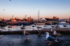 Essaouira port at dusk, Morocco (achel cabonell) Tags: africa street city travel sunset people urban house building port walking outdoors fishing fisherman ship dusk seagull unesco viajes morocco maroc medina marruecos essaouira moroccan worldheritage travelphotography colorimage documentaryphotography buildingexterior moroccanculture builtstructure rachelcarbonell moroccantraditions