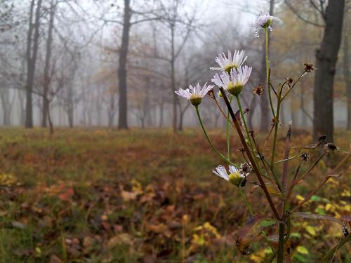 Foggy autumn morning #1